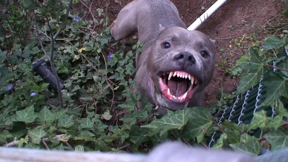What Decibel Is A Dog S Bark